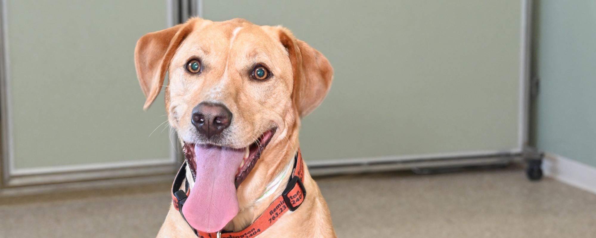 Pet Hotel For Pets In Zimmerman Mn Zimmerman Veterinary Clinic