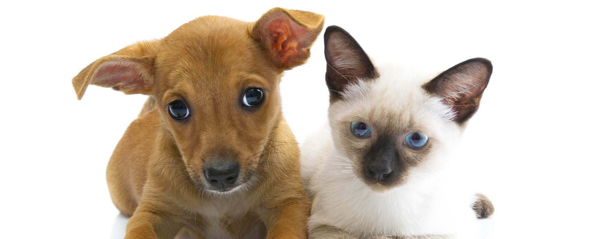 Puppy And Kitten Care Elk River Mn Zimmerman Veterinary Clinic
