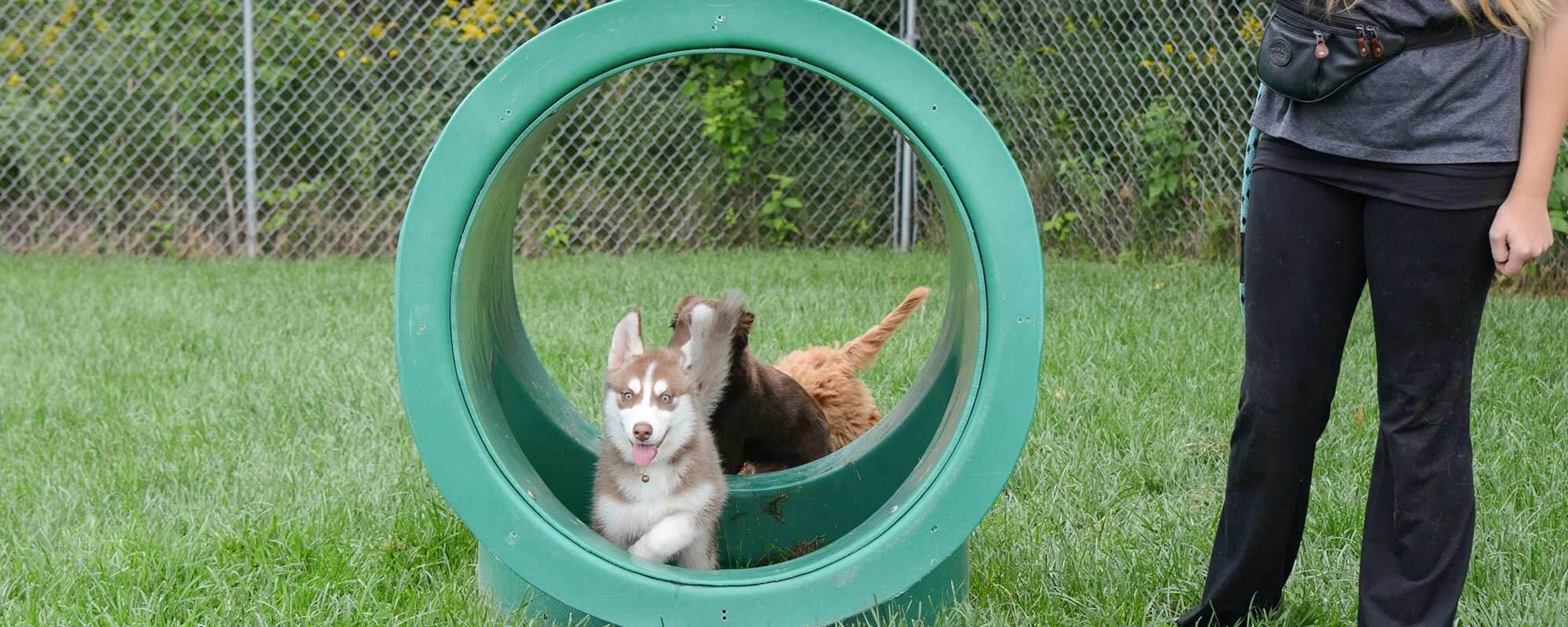 Pet Care Videos Zimmerman Mn Veterinarian Zimmerman Veterinary Clinic