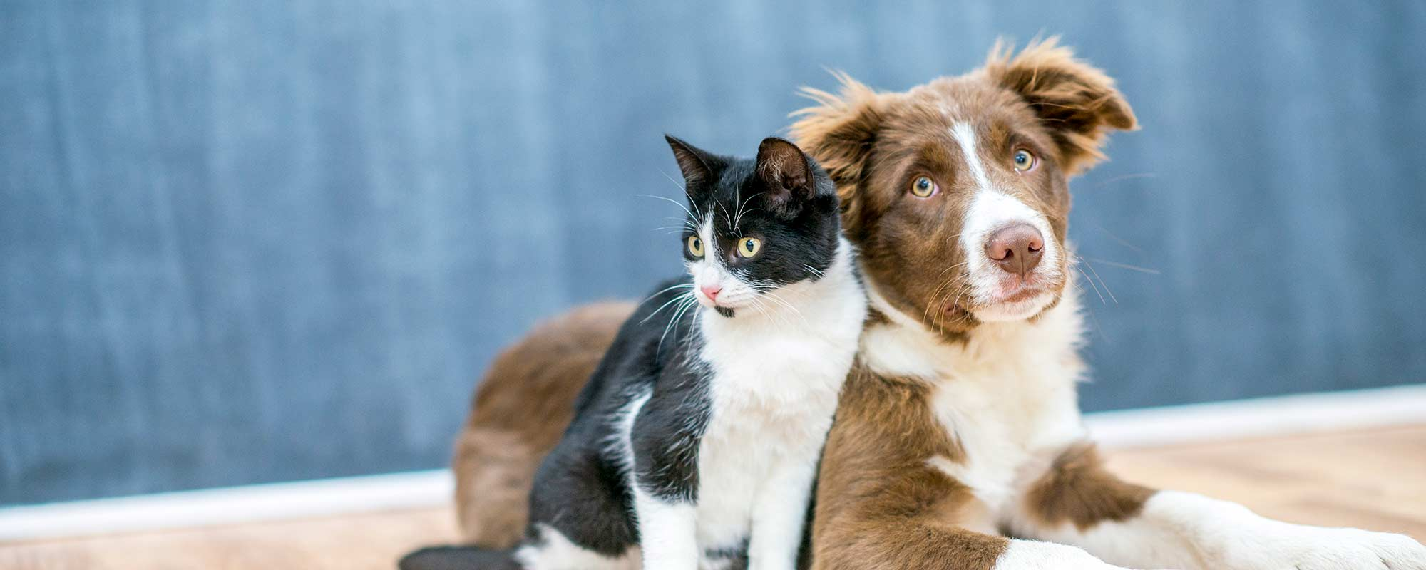 Elk River Mn Pet Wellness Zimmerman Veterinary Clinic