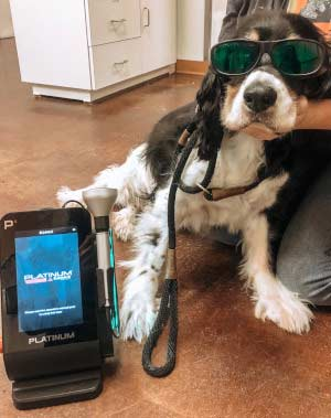 Laser Therapy at Zimmvet